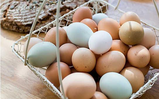 5 Rezepte mit Ei