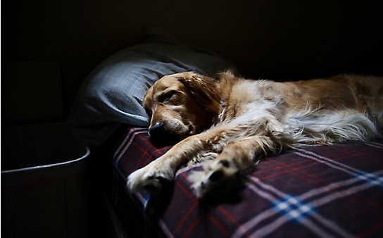 Dürfen Hunde ins Bett?