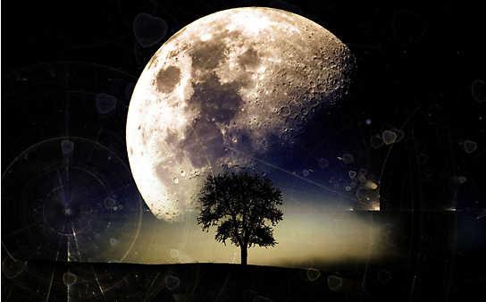 Der Servus-Mondkalender für Wohlbefinden, Haus & Garten