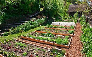 Käfers Gartentipps: So bleibt das Gemüsebeet schädlingsfrei und gesund