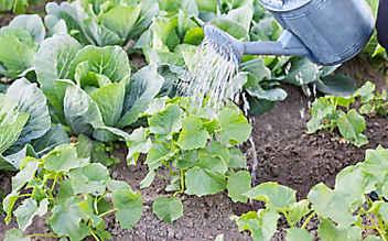Käfers Gartentipps: Ist Regenwasser zum Gießen besser als Leitungswasser?