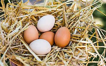 So erkennen Sie, ob ein Ei noch frisch ist