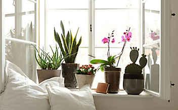Käfers Gartentipps: Zimmerpflanzen richtig düngen