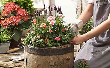 Die ideale Erde für Rosenpflanzen hat eine lockere Struktur