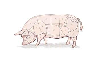 Kleine Fleischkunde: Was ist was beim Schwein?