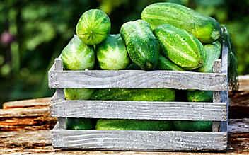Diese Obst- und Gemüsesorten haben im Juni Saison