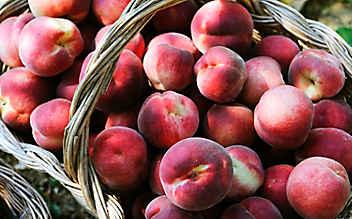 Diese Obst- und Gemüsesorten haben im August Saison