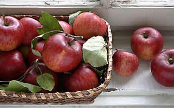 Diese Obst- und Gemüsesorten haben im November Saison