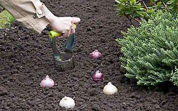 September-Gartentipp Nr. 2: Der Frühling wird eingepflanzt