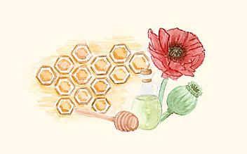 Grüne Kosmetik zum Selbermachen: Mohnöl-Deocreme
