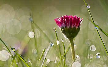 Naturphänomene: Blumige Wetterboten
