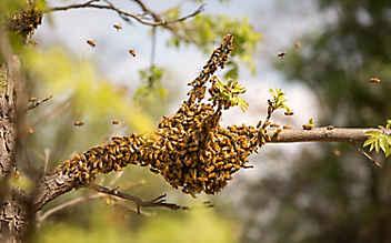 Die Welt der wilden Bienen