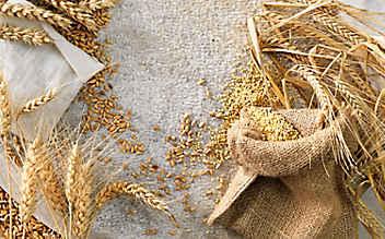 Kleine Mehlkunde, Teil 1: Weizen, Roggen, Dinkel