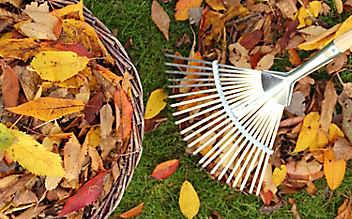 So kompostieren Sie Herbst-Laub richtig