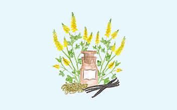 Grüne Kosmetik zum Selbermachen: Winter-Parfüm