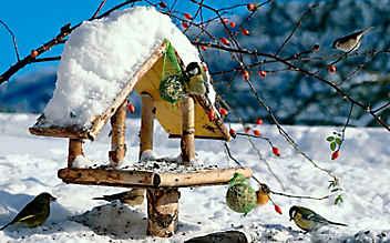 Bastel-Anleitung: So entsteht ein Vogelhaus