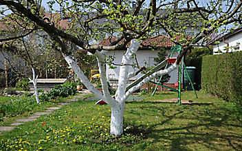 Oktober-Gartentipp Nr. 5: Winterschutz für Bäume