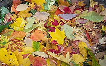 November-Gartentipp Nr. 3: Laub kompostieren