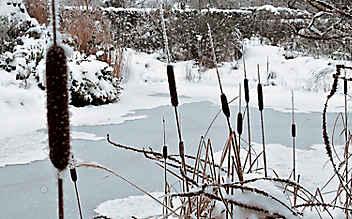 Dezember-Gartentipp Nr. 3: Luftlöcher im Teich schaffen