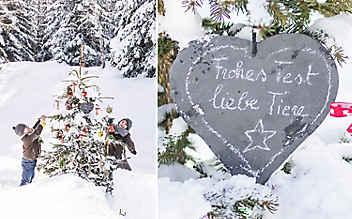 Futter-Christbaum für Tiere