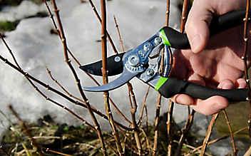 Februar-Gartentipp Nr. 1: Sträucher stutzen und verjüngen
