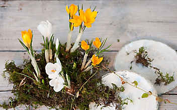 Frische Frühlings-Deko
