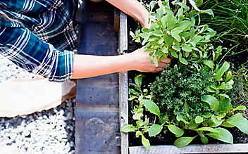 März-Gartentipp Nr. 4: Kräuterbeet richtig anlegen