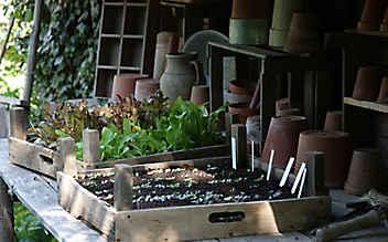 Adressen für Bio-Saatgut und Jungpflanzen in Österreich