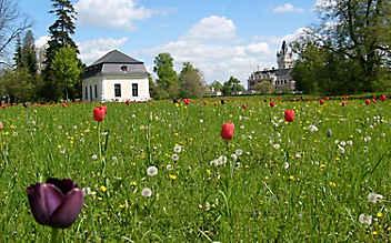 Veranstaltungstipp: Grafenegger Frühling (NÖ)