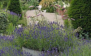 Mai-Gartentipp Nr. 1: Gute Nachbarn für den Lavendel