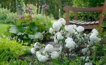 Mai-Gartentipp Nr. 3: Blühsträucher richtig schneiden