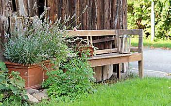 Juni-Gartentipp Nr. 3: Gelsen natürlich abwehren