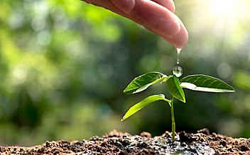 August-Gartentipp Nr. 4: Düngen nach Maß und Ziel