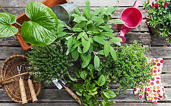 7 goldene Regeln für den Pflanzenkauf