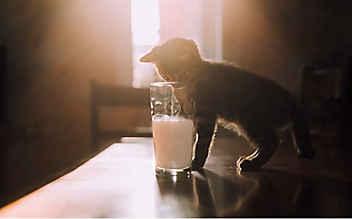 3 Rezepte mit Milch für Naschkatzen