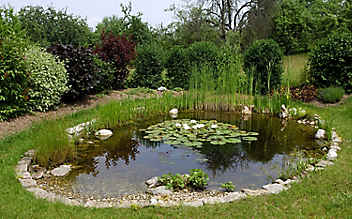Sechs Schritte zum ökologisch intakten Teich