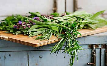 Das Kräuter-Einmaleins – Ernten, Trocknen & Lagern
