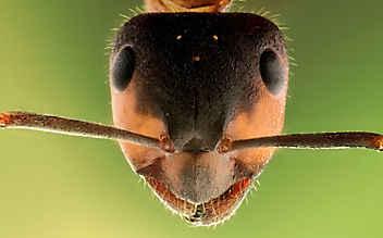 Diese Insektenstiche sollte man erkennen