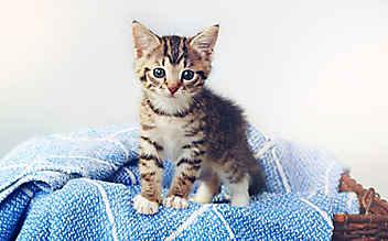8 Fakten, die Sie noch nicht über Katzen wussten