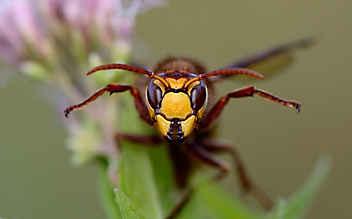 5 Insektenschutz-Produkte, die gut wirken