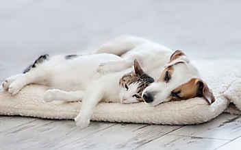 Vertragen sich Hunde & Katzen?