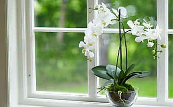 So vermehrt man Orchideen