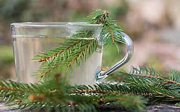 6 Heiltinkturen mit Wald-Pflanzen
