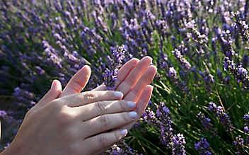 Lavendel-Handcreme zum Selbermachen