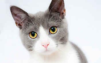 Kärnten: Tierquäler riss Katze die Krallen aus