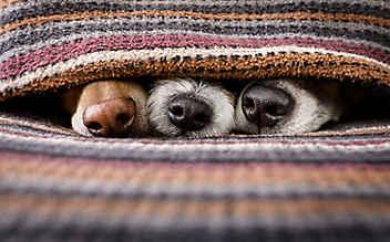 Ihr Hund kann noch besser riechen als Sie denken