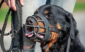 Nach tödlichem Hundebiss: Rottweilerklub für Beißkorbpflicht