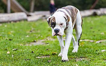 Ehepaar von Hunden attackiert
