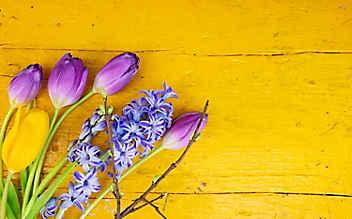 Im Herbst bereiten wir den Frühling im Beet vor