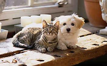 Naturapotheke für Hund und Katz